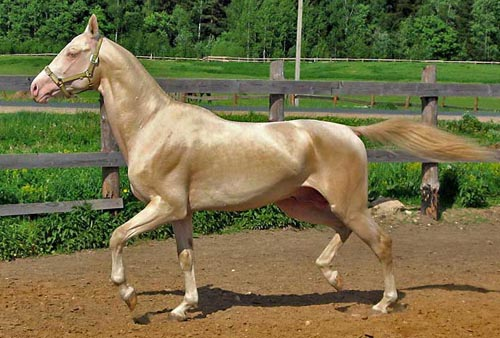 Most Beautiful Horse In The World Hooves