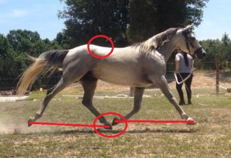 Trot - Marked