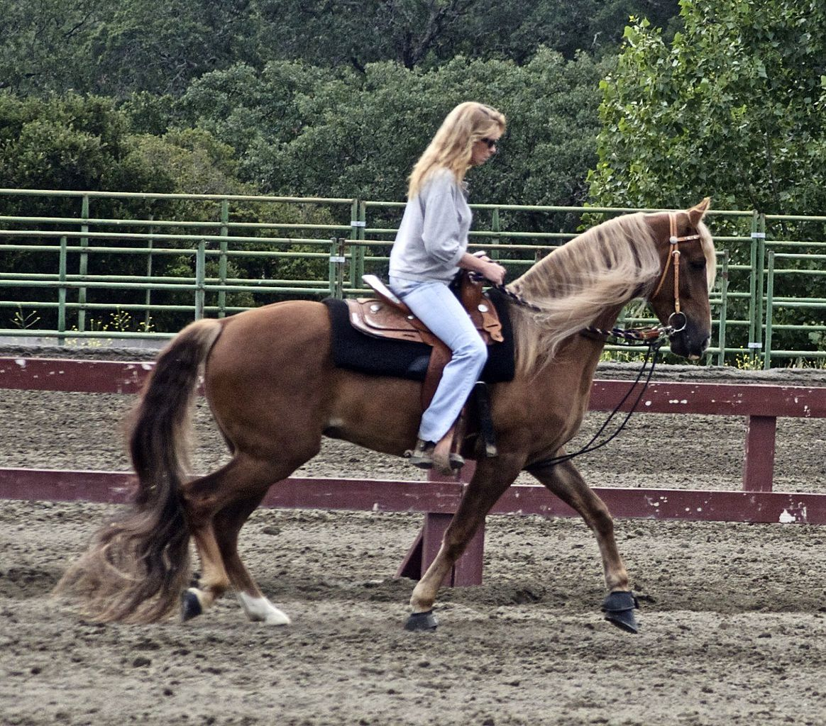 Topline Summary 1 Gaited And Saddleseat Hooves