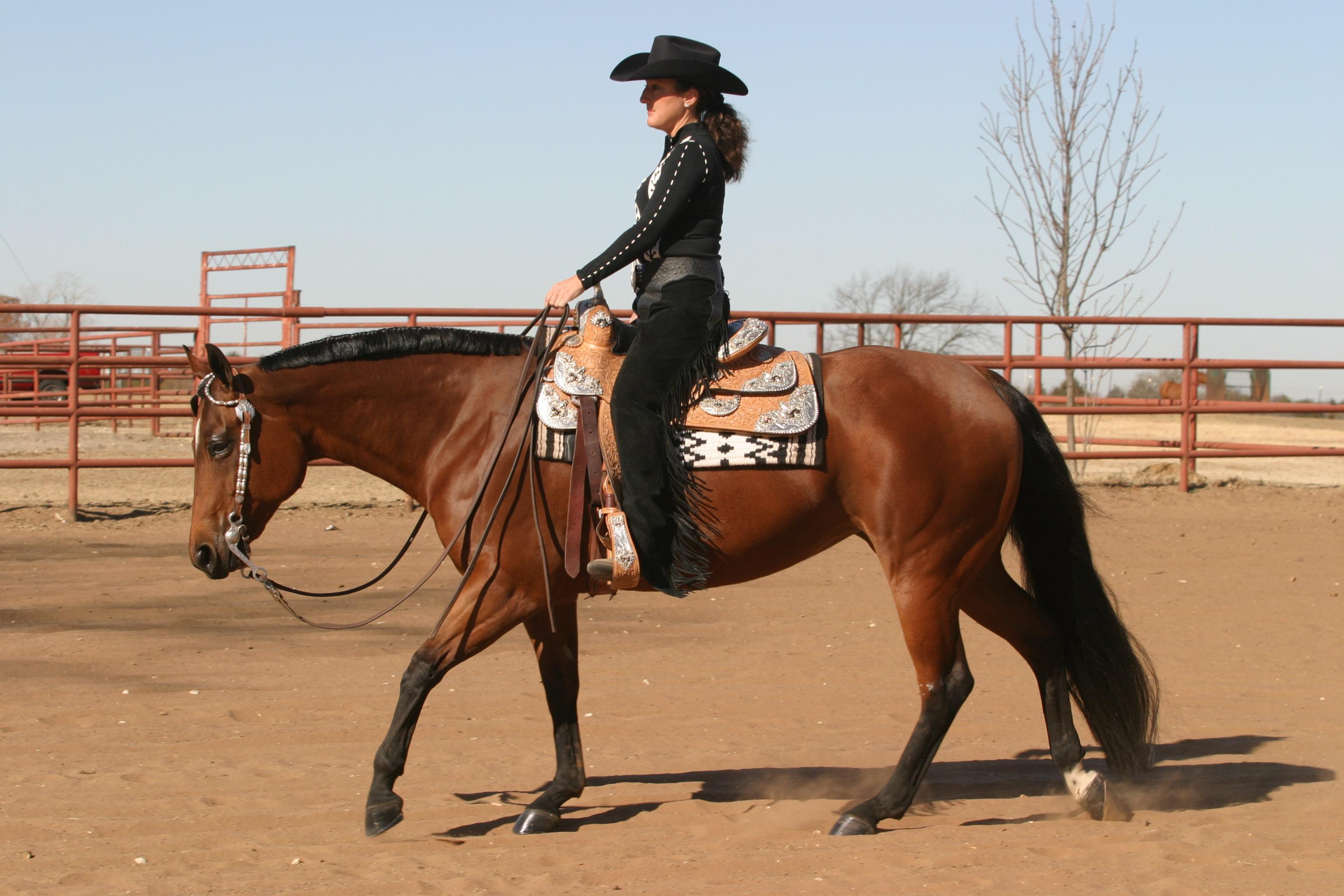 Improving The Horses Topline
